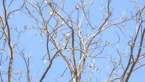 Bäume im Wald verfallen im Sommer lizenzfreie stockbilder