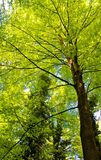 Bäume im Waldweg Stockfoto
