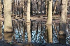Bäume im Wasser lizenzfreie stockfotografie