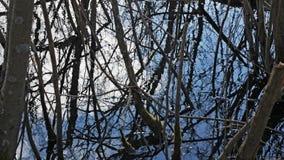 Bäume im Wasser im starken Wind Stockfotos