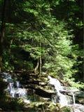 Bäume im Wasserfall Stockfoto