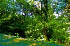 Bäume im Weg Stockbild