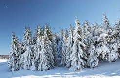 Bäume im Winter stockfotografie