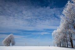 Bäume im Winter Lizenzfreie Stockfotografie