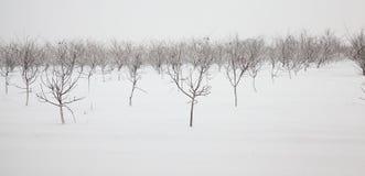 Bäume im Winter Lizenzfreies Stockbild