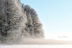 Bäume im Winter Lizenzfreie Stockbilder