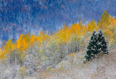 Bäume im Winter Stockfoto