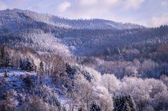 Bäume im Winter im Schwarzwald, Deutschland lizenzfreies stockfoto