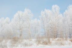 Bäume im Winter im Winter Schönes Bild des Winters landscape Frost auf Bäumen im Winter Lizenzfreie Stockfotos