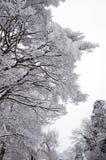 Bäume im Winter-Schnee Stockbild