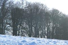 Bäume im Winter schneien an Levens-Park, Cumbria lizenzfreie stockfotografie