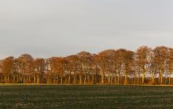 Bäume im Wintersonnenuntergang. Stockfotos