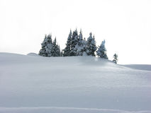 Bäume im witer Lizenzfreie Stockfotografie