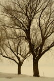 Bäume im witer Stockbilder