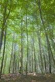 Bäume innerhalb eines Waldes Stockfotografie