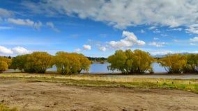 Bäume kleideten in den gelben Blättern während des Herbstes an den Kiefern auf den Strand setzen, See Tekapo an Lizenzfreie Stockfotografie
