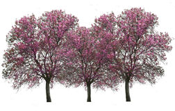 Bäume lokalisiert über Weiß lizenzfreies stockbild