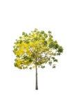 Bäume lokalisiert auf weißem Hintergrund Lizenzfreies Stockfoto