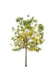Bäume lokalisiert auf weißem Hintergrund Stockfoto