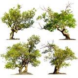 Bäume lokalisiert auf weißem Hintergrund. Grüne Naturanlagen Stockfotos