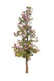 Bäume lokalisiert mit weißem Hintergrund Lizenzfreies Stockbild