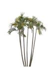 Bäume lokalisiert mit weißem Hintergrund Lizenzfreie Stockfotos