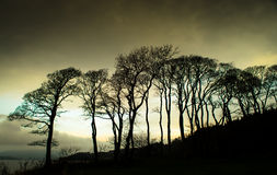 Bäume an Lunderston-Bucht Lizenzfreie Stockfotografie
