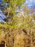 Bäume in Maine Stockbild