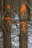 Bäume, markiert für Ausbau stockfotografie