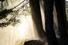 Bäume markiert für geschnittene againt Sonne hintergrundbeleuchtet lizenzfreie stockbilder