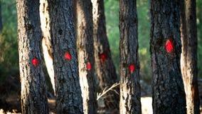 Bäume markiert für Schnitt mit roten Punkten stockfoto