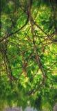 Bäume an meinen Wohnungen Stockfoto