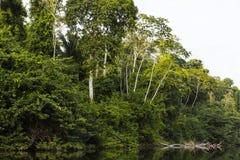 Bäume mit Blättern entlang Fluss Lizenzfreie Stockfotos