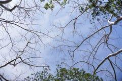Bäume mit blauem Himmel Stockfotos