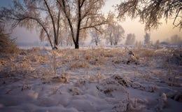 Bäume mit den schneebedeckten Niederlassungen, beleuchtet durch die Sonne. stockfotos