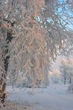 Bäume mit den schneebedeckten Zweigen, beleuchtet durch die Sonne. lizenzfreies stockbild