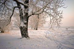 Bäume mit den schneebedeckten Zweigen, beleuchtet durch die Sonne. Stockfotos