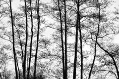 Bäume mit einem Hintergrundholzschuh lizenzfreies stockbild