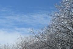 Bäume mit eisigen Niederlassungen, die in der Sonne glänzen stockfoto