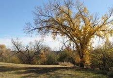 Bäume mit Fallfarben Stockbilder