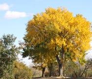Bäume mit Fallfarben Stockfoto