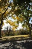 Bäume mit Fallfarben Stockfotos