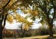 Bäume mit Fallfarben Stockbild