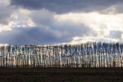 Bäume mit gefallenen Blättern stehen in einer Gerade gegen das Ba stockfoto
