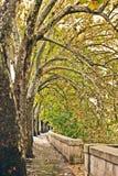 Bäume mit gelben Blättern entlang Fluss Tiber in Rom Lizenzfreie Stockbilder