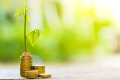 Bäume mit Geld, Rettungsgeld und den wachsenden Händen Wachsendes Geschäfts-Wachstum und Finanzpflanzenzucht von den Münzen in Gl lizenzfreie stockfotografie