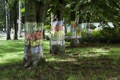 Bäume mit gemaltem Stamm lizenzfreie stockbilder