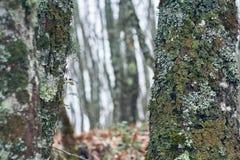 Bäume mit Herbstmoos im Wald lizenzfreies stockfoto