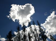 Bäume mit Inneres geformter Wolke 2 Stockbilder