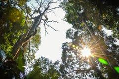 Bäume mit Morgenleuchte Stockfotos